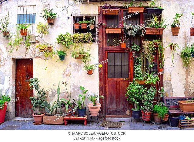 Potted plants in a facade of a house, outdoor, street. Barcelona, Catalonia, Spain