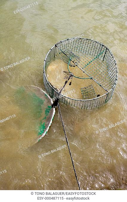 Crab trap wire round net in a brown river water