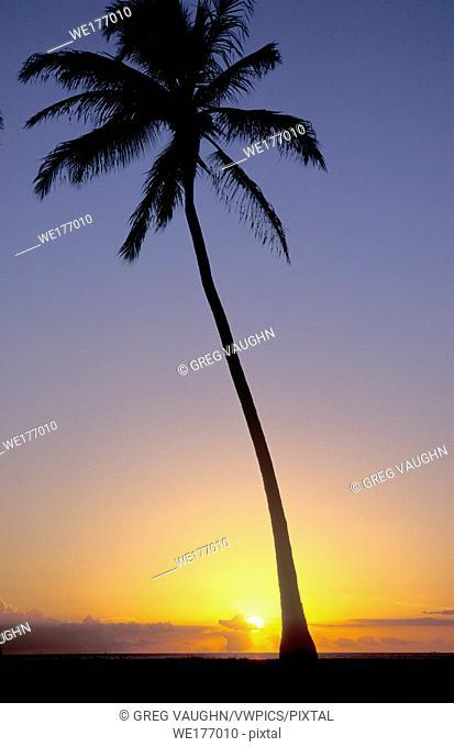 Coconut Palm tree silhouetted at sunset; Magic Island, Ala Moana Beach Park, Honolulu, Oahu, Hawaii