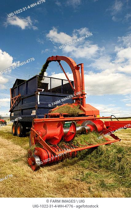 Trailed forage harvester picking up grass and loading trailer. (Photo by: Wayne Hutchinson/Farm Images/UIG)