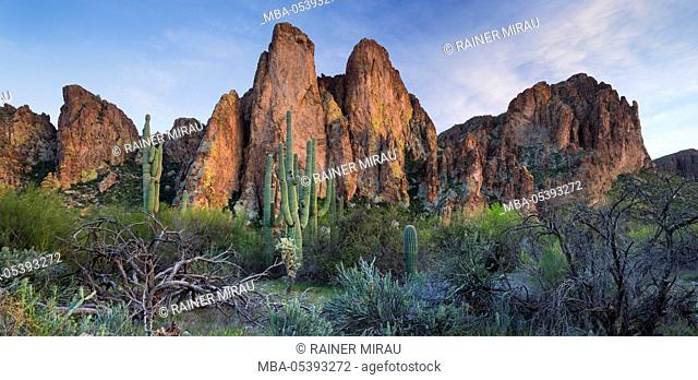 The Bulldogs, Carnegiea gigantea, Goldfield Mountains, Lower Salt River, Arizona, USA