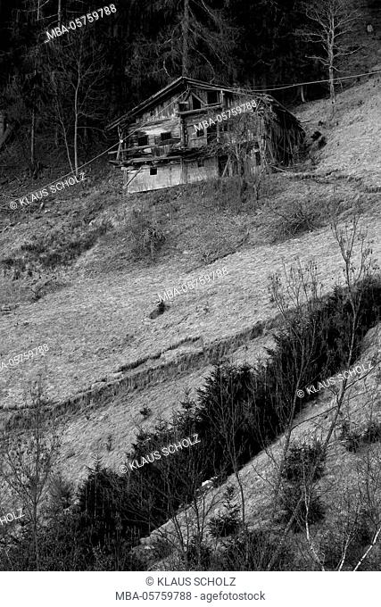 decayed house at the edge of the forest