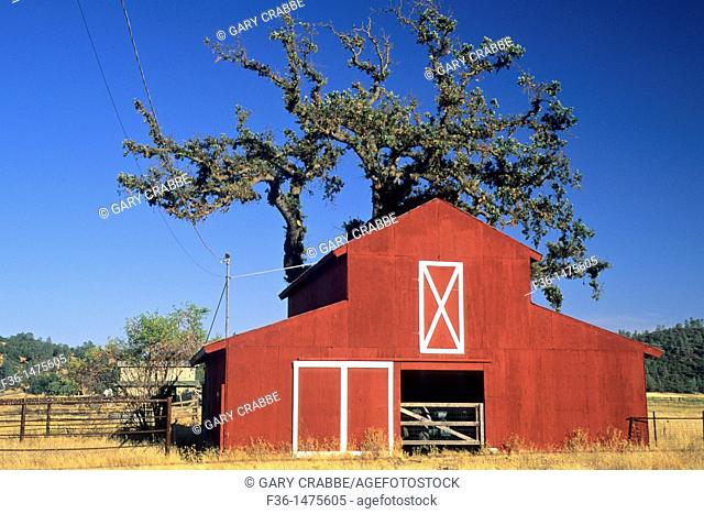 Red Barn and tree, near Middletown, Lake County, California