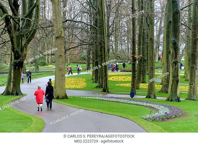 Keukenhof flower garden, Lisse, Netherlands, Europe
