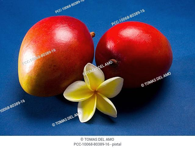 Studio shot of two mangos