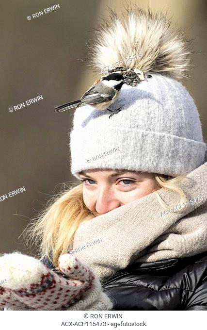 Young woman feeding chickadees on her toque, Lynde Shores Conservation Area, Whitby, Ontario, Canada