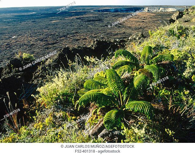 Kilauea, Hawaii Volcanoes National Park. Big Island, Hawaii. USA