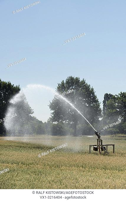Portable sprinkler irrigation machine spraying water over farmland during a drought summer, hot and dry summer 2018, Europe