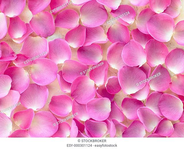 Large Group Of Pink Rose Petals
