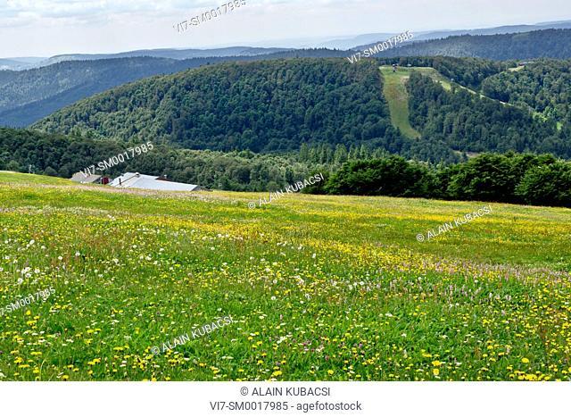 Hautes Chaumes, Route des Crêtes, Vosges natural regional Park, France