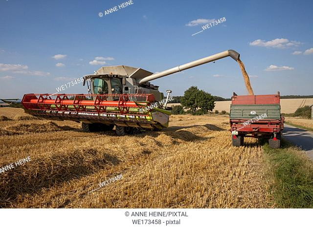 Wheat harvest on the Haarstrang in Soester Börde, in hot dry summer 2018. Germany
