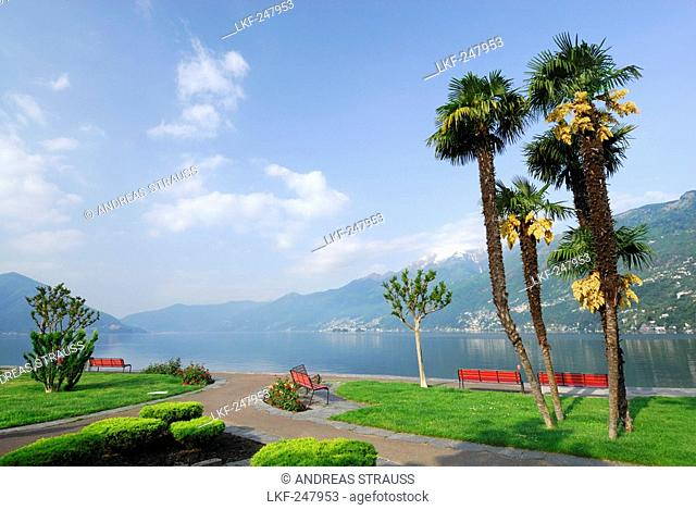 Park with benches and palm trees and view towards lake Maggiore, Ascona, lake Maggiore, Lago Maggiore, Ticino, Switzerland