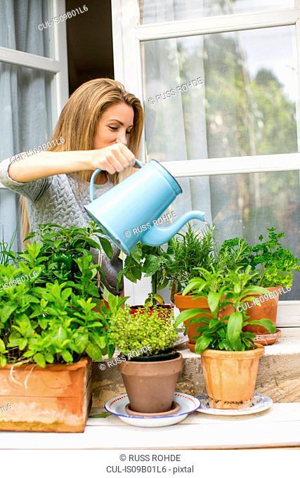 Woman watering herb plants on windowsill
