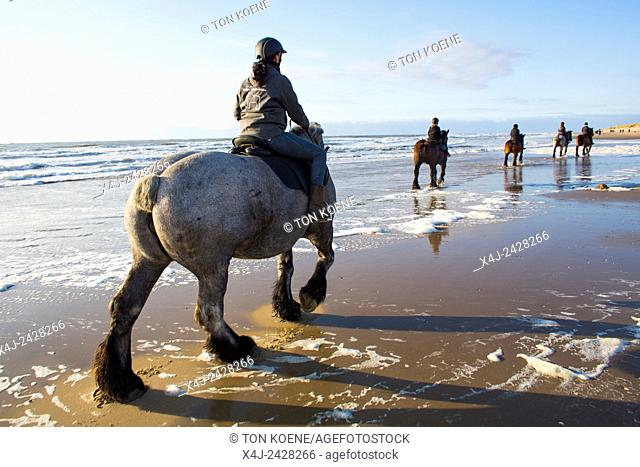 workhorse on the beach on Texel island, Holland