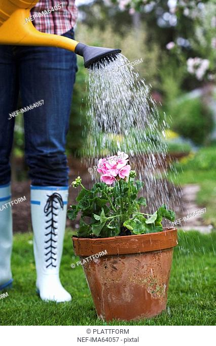 A woman watering a flower
