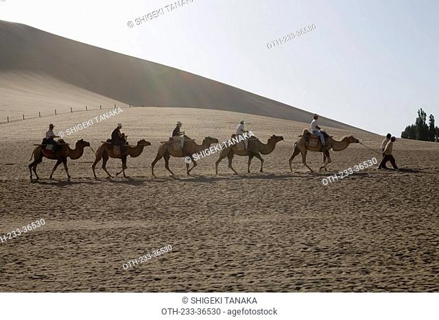 Camels on Mingsha Mountain, Dunhuang, China