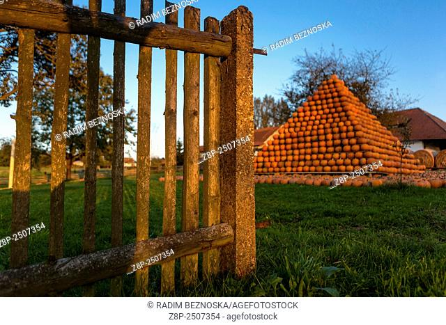 Pipka farms, growing in the Vysocina Region different kinds of pumpkins. Czech Republic