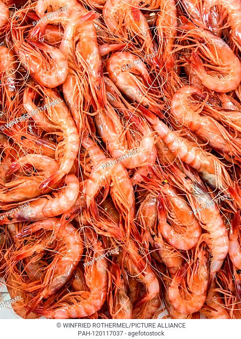 fresh gambas , Port Andratx, April 15, 2019 | usage worldwide. - Port Andratx/Balearen/Spain