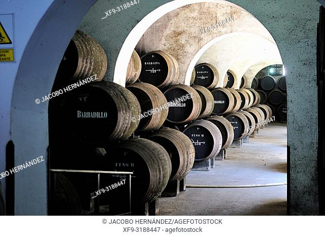 Wine cellar. Sanlúcar de Barrameda. Cádiz province. Andalusia. Spain