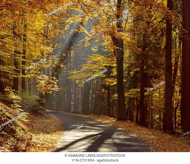 Road in Beech Forest with Sunbeams in Autumn, Hohe Wart, Hessentahl, Spessart, Bavaria, Germany