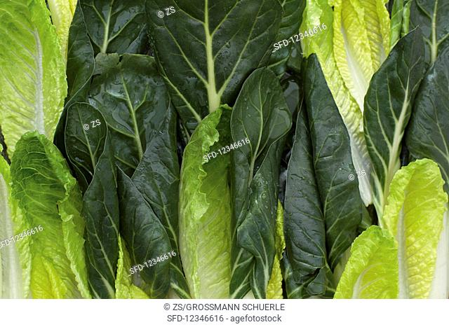 Chard and romaine lettuce leaves