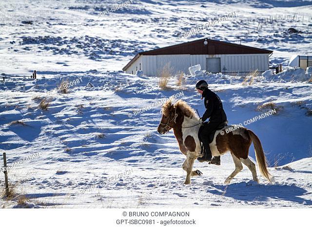 RIDER ON AN ICELANDIC HORSE, FARM IN GRUNDARFJORDUR, SNAEFELLSNES PENINSULA, WESTERN ICELAND, EUROPE