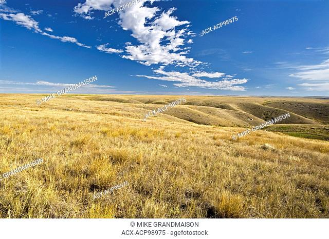 native prairie grasslands. (West Block) Grasslands National Park Saskatchewan Canada