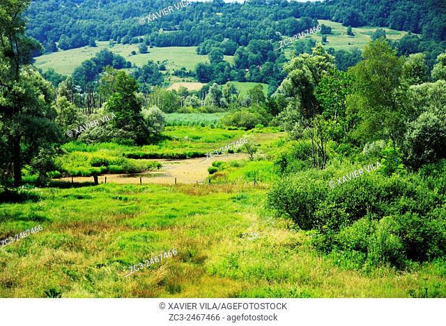 Swamp of Herretang, Saint Laurent du Pont, Nature of the french Alps, Isere, Rhone Alpes, France