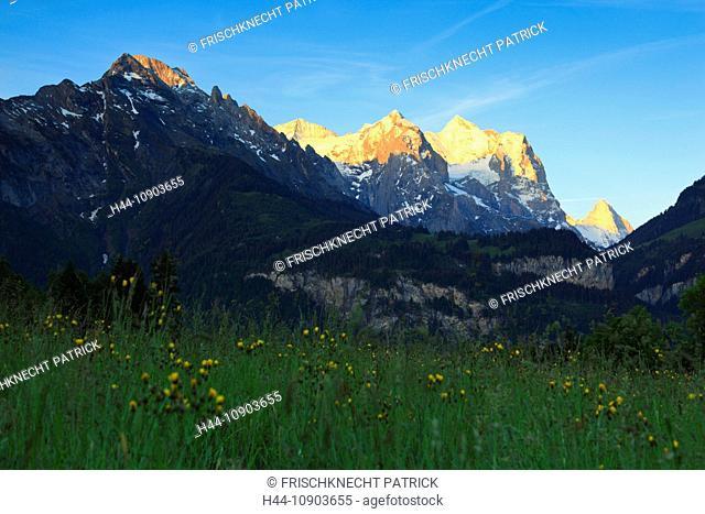 Alp, alps, flora, view, Hasliberg, mountain, mountains, mountain flora, mountain spring, mountain massif, Bern, Bernese Oberland, flowers, Eiger, Engelhörner