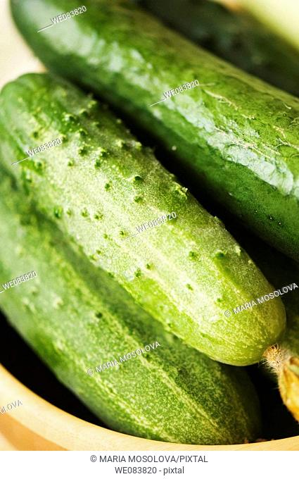 Freshly Harvested Cucumbers in a Bamboo Bowl. Cucumis sativus