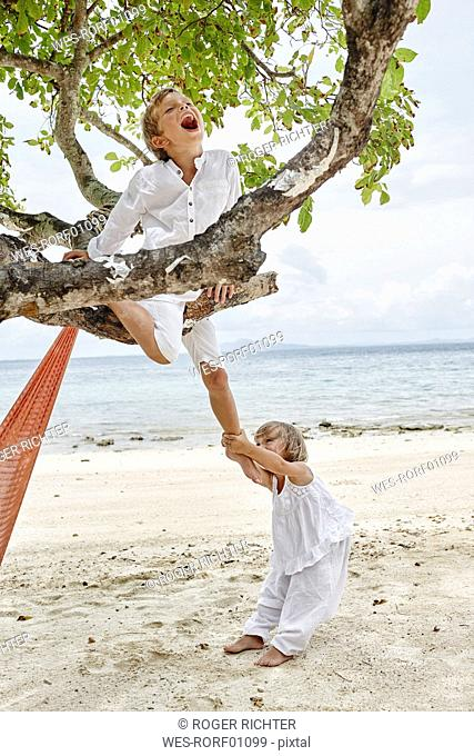 Thailand, Phi Phi Islands, Ko Phi Phi, playful boy and little girl climbing on a tree on the beach