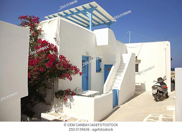 Whitewashed Cyclades house decorated with bougainvilleas in Naoussa village, Paros Island, Cyclades Islands, Greek Islands, Greece, Europe