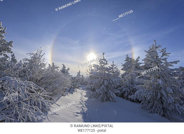 Snow covered coniferous trees with halo and sun in winter, Mount Fichtelberg, Oberwiesenthal, Erzgebirge, Ore Mountains, Saxony, Germany, Europe