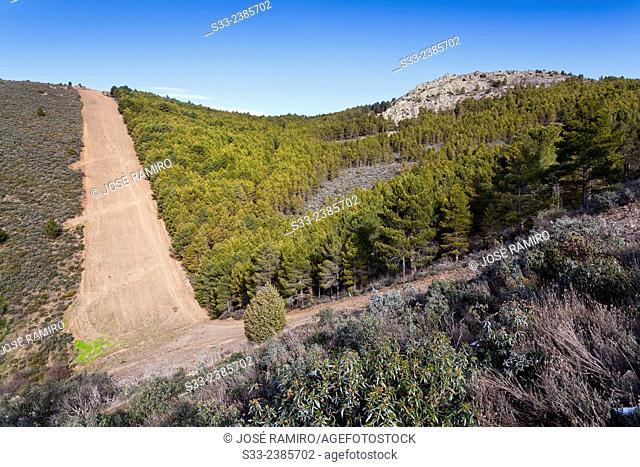 Firewall in the Ladero de Calzones. Sierra Norte. Patones. Madrid. Spain. Europe
