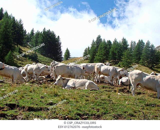 Pasture on Col de Tende