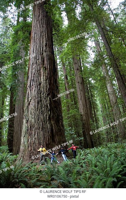 USA, California: Jedediah Smith Redwood State Park