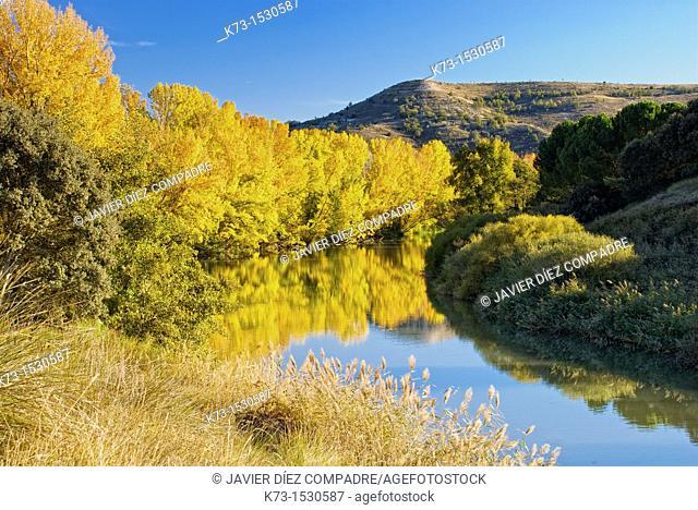 Duero River. Valbuena de Duero. Valladolid Province. Castilla y Leon. Spain
