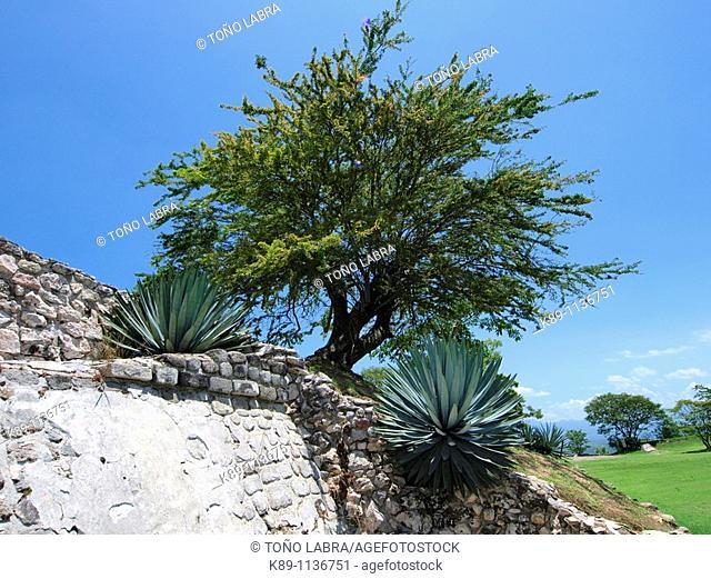 Acrópolis. Xochicalco archaelogical site. Mexico