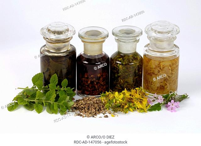 Different tinctures Tormentil Balm Perforate St John's Wort Herb Robert tincture cut out object
