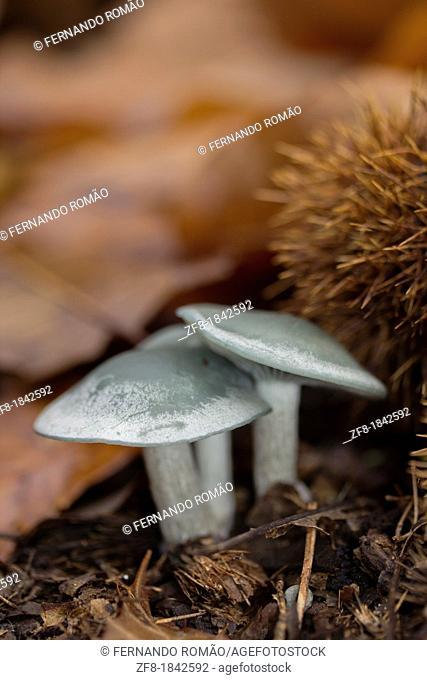 Mushrooms at Lousã Mountain, Portugal