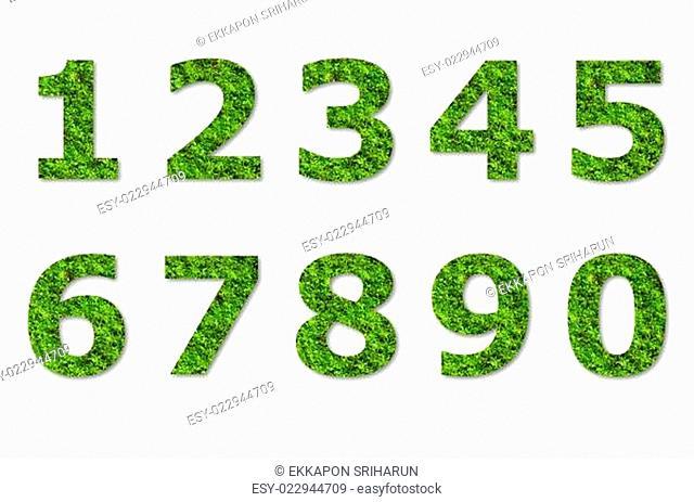 arabic numeric of green lichen