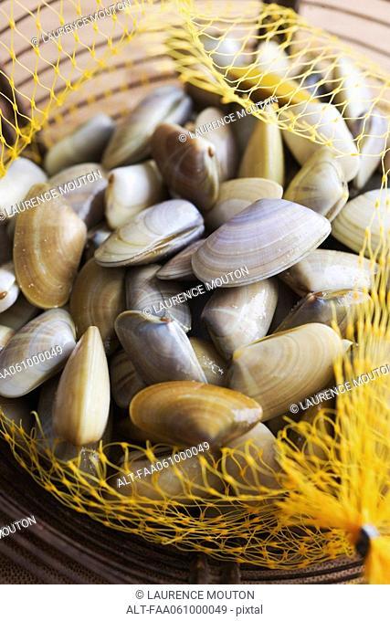Sack of fresh clams