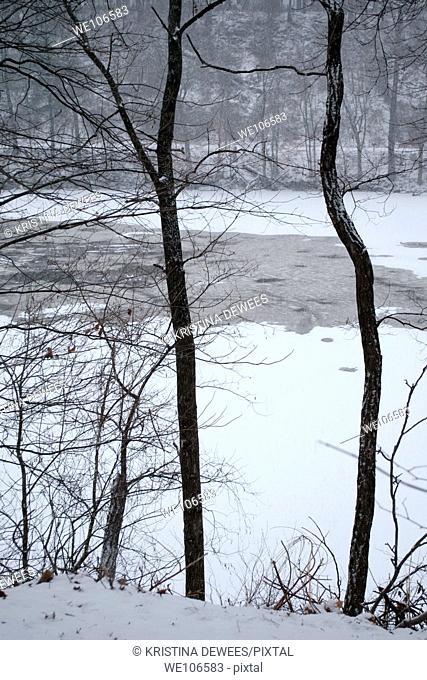 A freezing lake seen through the trees