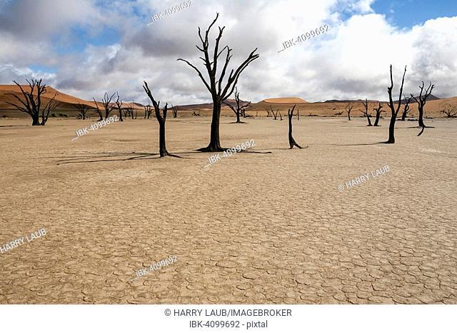 Dead Camel thorn trees (Vachellia erioloba), sand dunes, salt and clay pan, Dead Vlei, Sossusvlei, Namib Desert, Namib-Naukluft National Park, Namibia