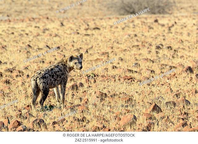 Desert Rhino Camp. Palmwag Concession. Namibia