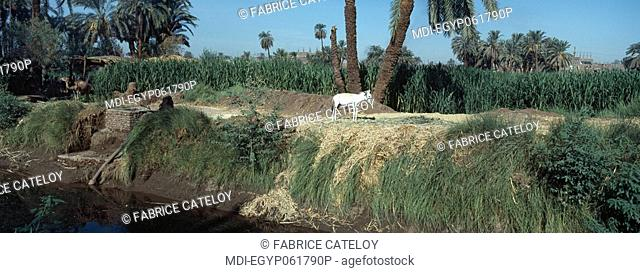 Fields and irrigation canal