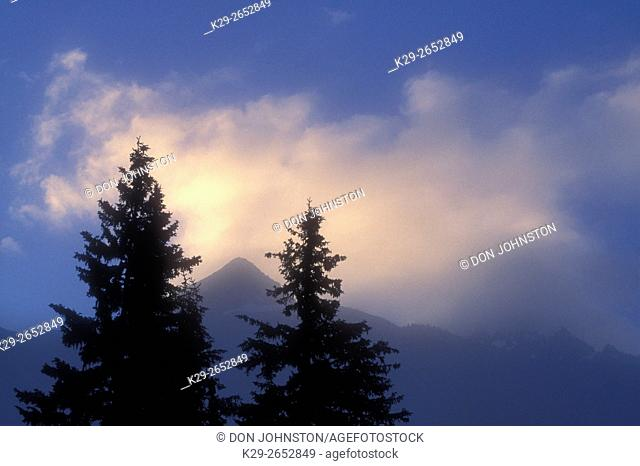 wo silhouetted spruce trees in light fog at Roger Pass, Glacier National Park, BC, BC, Canada