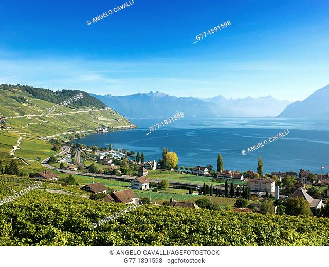 Switzerland  Canton Vaud  Montreux  Lavaux Vineyards