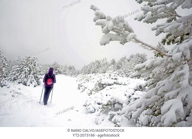 Young woman hiking in snowy day at Peñalara, highest mountain peak in the mountain range of Guadarrama, Spain