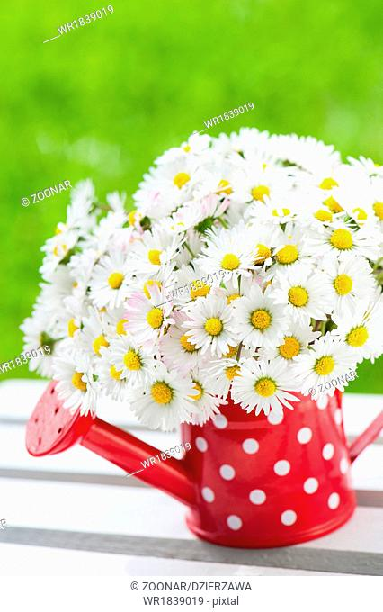 Daisies in a watering can